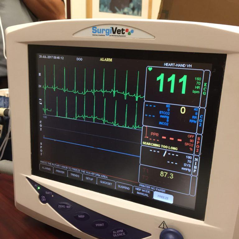 Vetspecs Dm5 Patient Monitor Veen America Veterinary